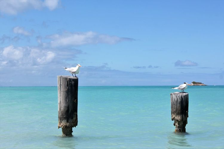 Seagull perching on wooden post by sea against sky