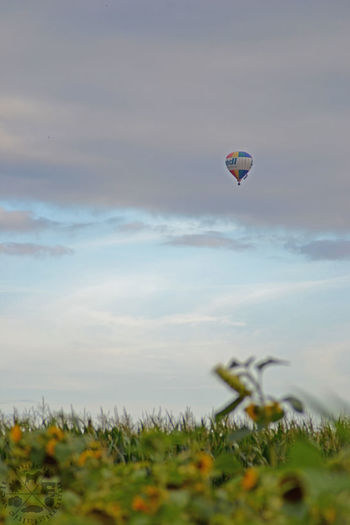 Celle Sky And Clouds Himmel Sky Nature_collection Nature Photography Naturelovers Natur Heißluftballon Hot-air Balloon Clouds Wolken Wolkenhimmel Field Feld Sonnenblume Sunflowers
