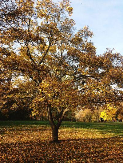 Autumn Art Autumn Leaves Autumn Autumn Colors Park Nature_collection Naturelovers Transition Season  Peaceful Inspirational