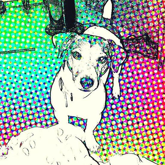 I Love My Dog Love Dog Love Dogslife FAMILIA♥ Pop Art Popular Photos Jackrussell Doggie Caracas City