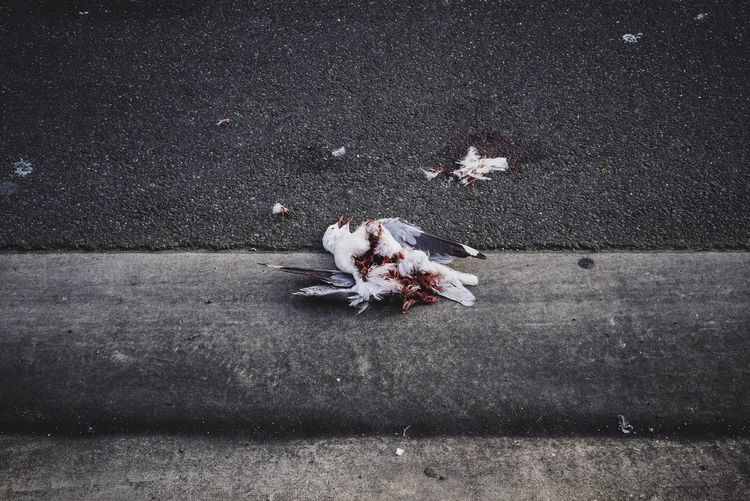 Streetphotography Streetphoto_color SonyA7s Sony Australia Vscocam Everyday Australia Dead Seagull Road Accident