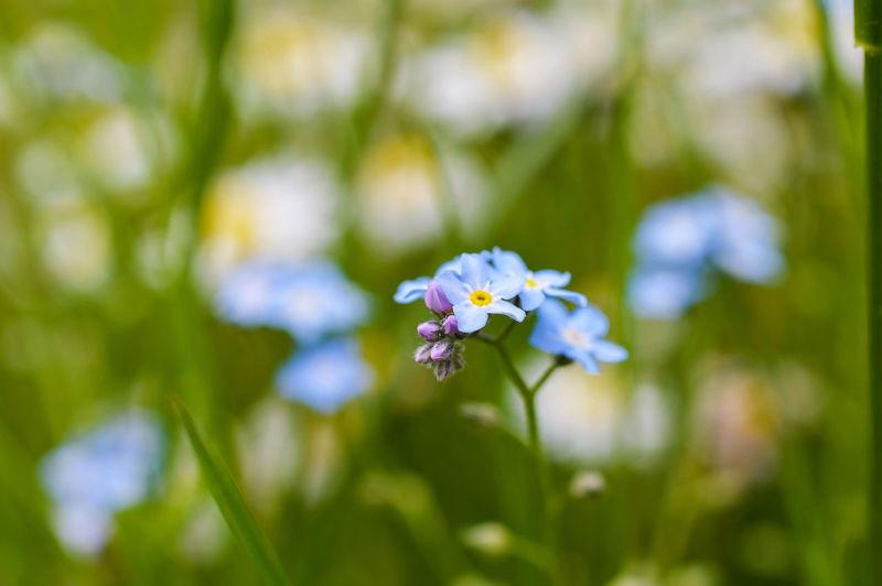 Blue flowers blooming outdoors