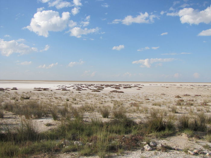 Africa Namibia Etosha National Park Etosha Landscape Panorama Flat Plain Sand Salt Blue Sky With Clouds Empty Environment Grass Scenics - Nature Tranquil Scene Tranquility Nature No People Cloud - Sky Beauty In Nature