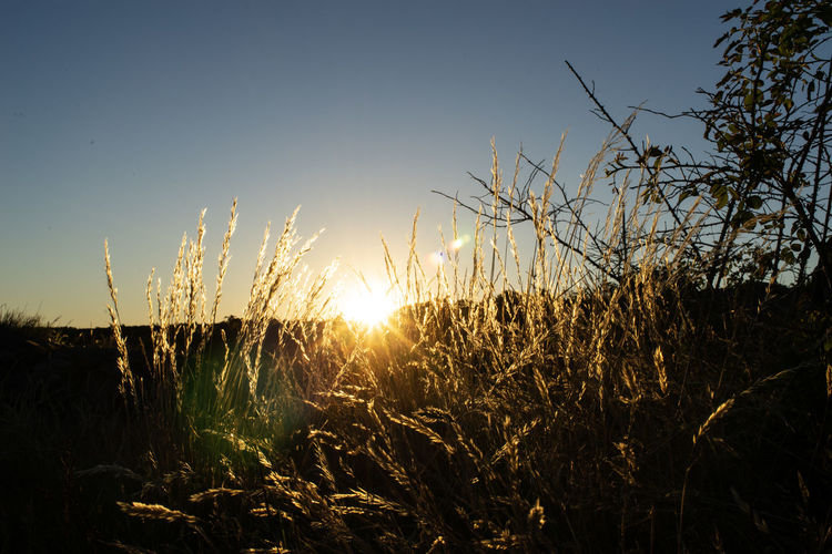 sunset Nature Photography Sunlight Beauty In Nature Blue Sky Field Grass Growth Land Landscape Lens Flare Nature No People Outdoors Plant Scenics - Nature Sky Stalk Strawstars Sun Sunbeam Sunlight Sunset Timothy Grass Tranquil Scene Tranquility
