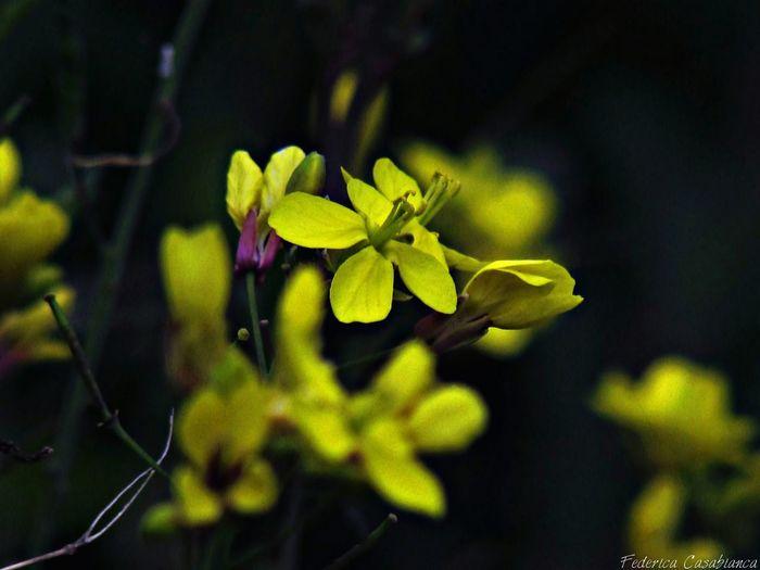 Una delle cose più affascinanti nei fiori è il loro meraviglioso riserbo. Eye4photography  Spring Flowers Natural Beauty Eyeem Photography Nature Photography Emozioni Floreali