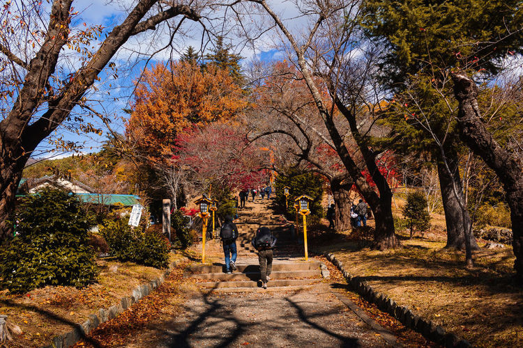 EyeEmNewHere Japan Travel Autumn Autumn Collection Beauty In Nature Branch Change Footpath Full Length Journey Lifestyles Men Nature Outdoors Park Plant Real People Shadow Travel Destinations Tree Walking