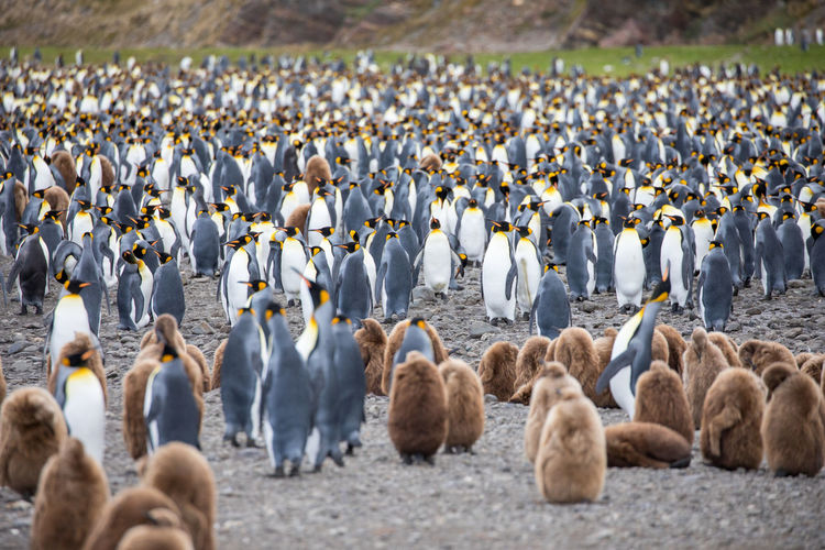 Penguins on field