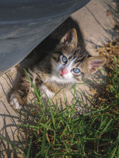 Animal Themes Baby Animal Blue Eyes Cute Day Domestic Animals Domestic Cat Feline Grass High Angle View Looking At Camera Mammal Nature No People One Animal Outdoors Pets Portrait Pets Corner Stray Cat