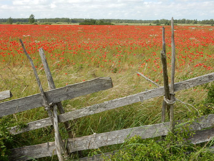 Wooden Fence By Flowers In Field