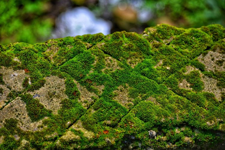 Green Pattern photography Textures and Surfaces Green Texture Grass Photography Pattern, Texture, Shape And Form Green Green Green!  Green Color Green Grass 🌱 Moss Tree Close-up Grass Plant Green Color Algae Fungus Fly Agaric Mushroom Mushroom Fly Agaric Edible Mushroom Uncultivated Growing Greenery Blossoming