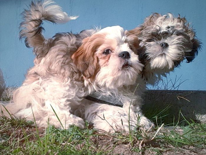 Portrait of dog on grass