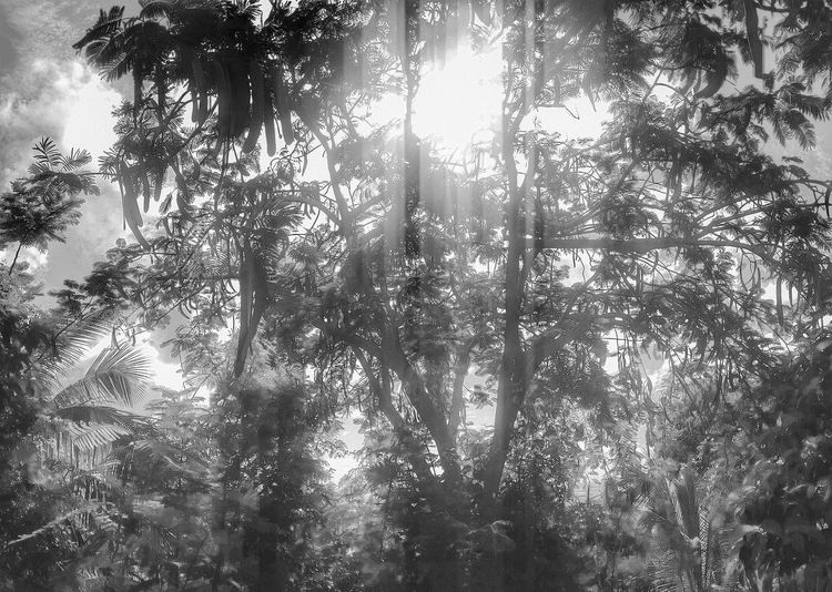 Barbados remix - (B & W Bootleg) Barbados Tree_collection  Black And White B & W  Tadaa Community Streamzoofamily Look Closer Monochrome Sunlight Fortheloveofblackandwhite