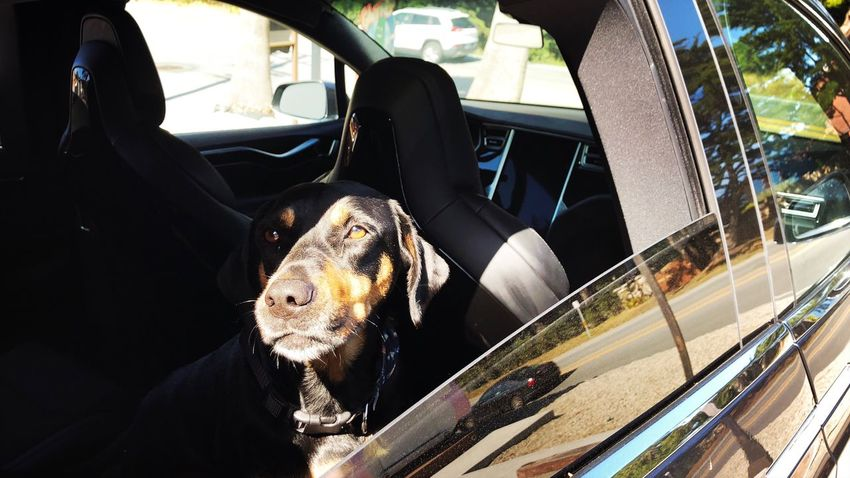 Car Mode Of Transportation Motor Vehicle Transportation Animal Themes Animal Vehicle Interior Car Interior Pets Glass - Material Canine Dog