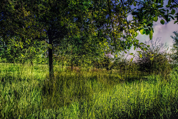 Warum in die Ferne reisen wenn das Schöne ist vor der Tür. Why travel if it is beautiful outside in the distance. Beauty In Nature Day Forest Grass Landscape Landscape_photography Morgenspaziergang Nature No People Outdoors Pferdeweide Sky Streetphotography Tree