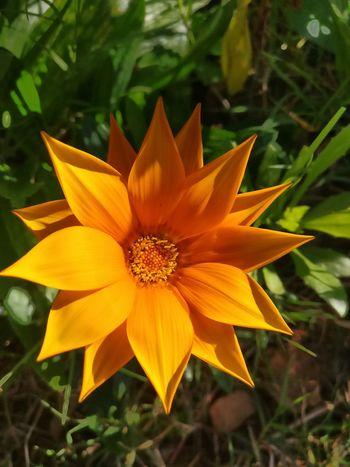 Nature Bright Flower Sydney