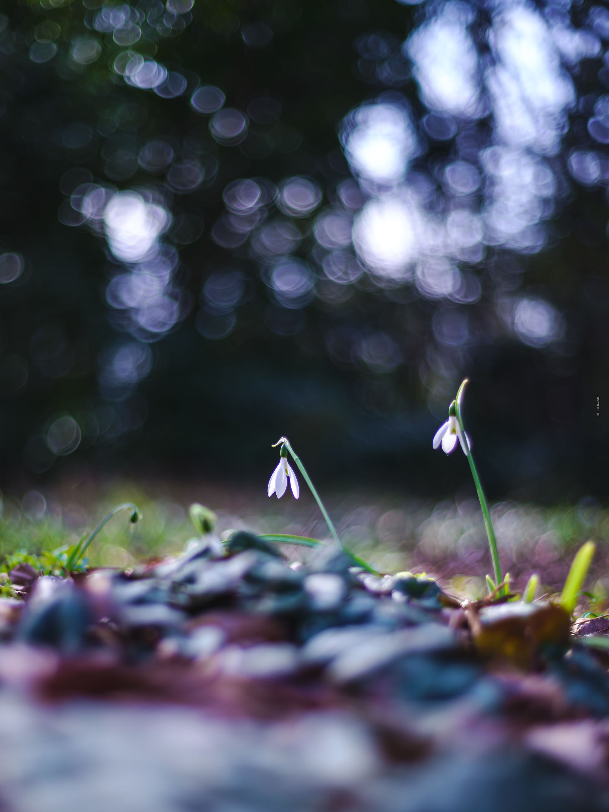 plant, nature, leaf, sunlight, light, flower, selective focus, tree, no people, green, branch, forest, outdoors, land, macro photography, plant part, beauty in nature, defocused, tranquility, environment, reflection, autumn, day, close-up