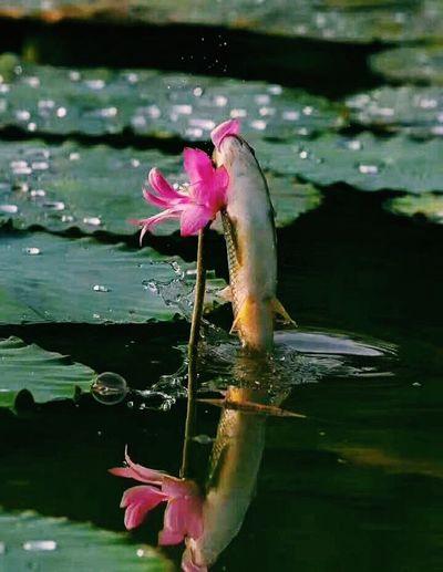 万物有灵 Animism Beauty In Nature Apparitions Animals In The Wild Flower Head Connected By Travel
