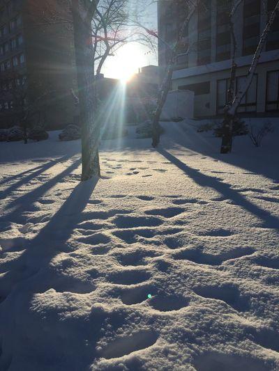 這樣的雪景是台灣沒有的街景 Snow Morning White Trip Enjoying Life