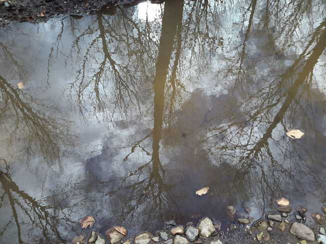 Tree Nature No People Growth Close-up Beauty In Nature Sky Day Outdoors Branch Water Puddle Puddlereflection Puddle Of Rain Puddle Of Water Reflection Reflections In The Water Bare Tree - in The Danish Countryside