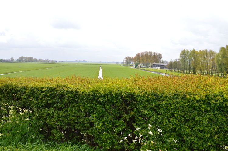 Hedge Infront Of Dutch Landscape Farmland Netherlands Beauty In Nature Ditch Dutch Field Grass Grassland Green Color Hedge Holland Infront Nature No People Rural Scene Scenics Sky Tranquility Tree