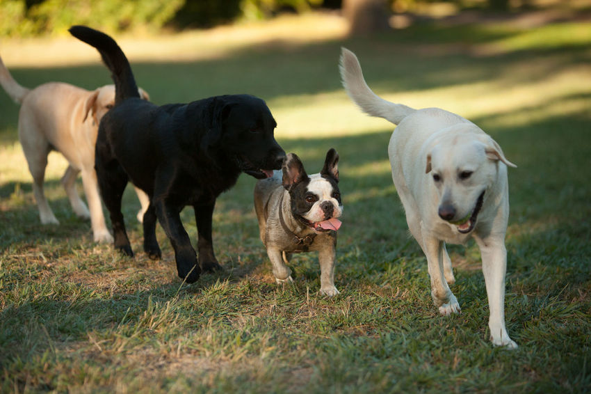 Bibi and friends Dogs Animal Themes Day Dog Domestic Animals Field Grass Mammal Nature No People Outdoors Pets Togetherness Young Animal