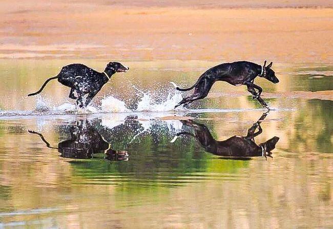 The Week On EyeEm Water Animal Themes Animal Reflection Splashing Outdoors Dog Domestic Animals Beach Running