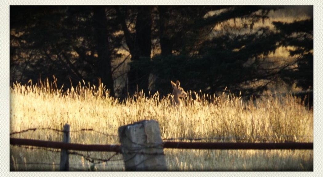 Kangaroo Enjoying The Sun