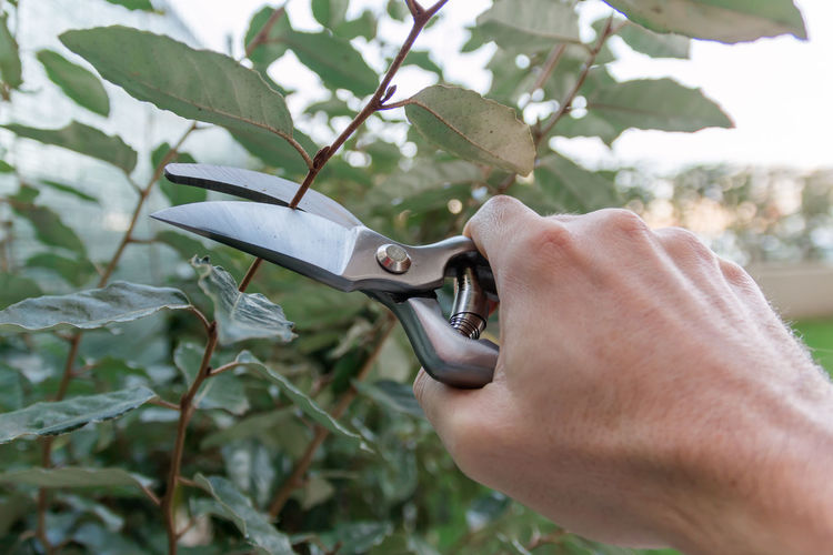 Cropped hand of man pruning plant