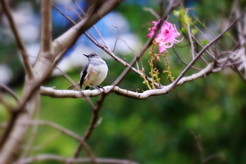 Plant Tree Branch Bird Vertebrate Perching Animal Wildlife Animal Animal Themes Animals In The Wild Focus On Foreground Nature No People Beauty In Nature Day Flower Growth Flowering Plant One Animal Outdoors
