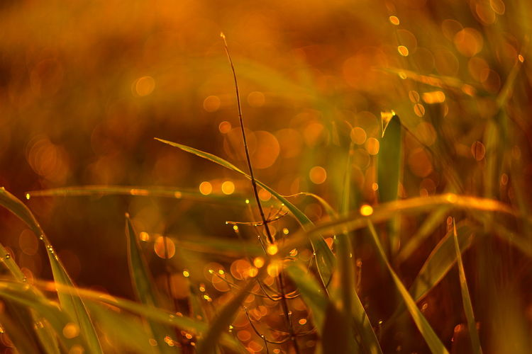 Capture The Moment Dew Drops Shine Bright Kira✨kira✨ Lens Flare Bokeh Lens Flares Tranquility Focus On Foreground Beauty In Nature Abstract Macro Old Lens Mood Landscapes Tranquility Nature Fragility Depth Of Field Light And Shadow Fine Art Still Life The Essence Of Summer EyeEm Best Shots 16_08