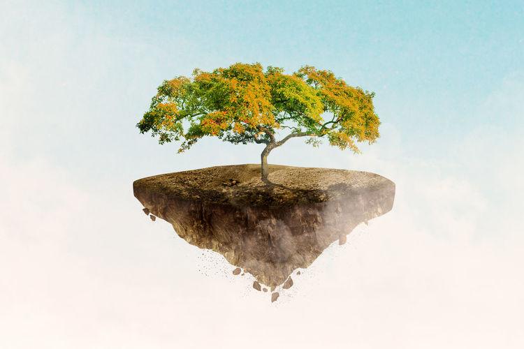 Plant on tree against sky