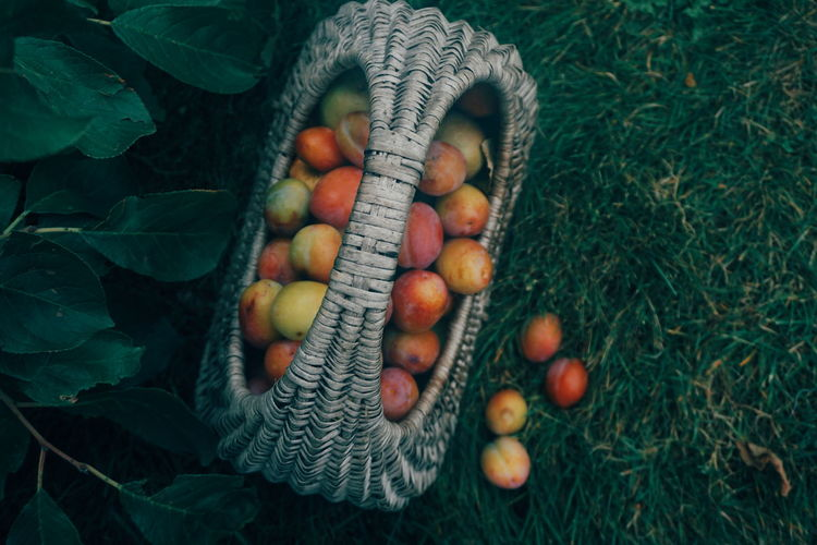Plums in basket on field