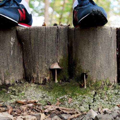 Close-up Hidden Hidden Nature Hidden Worlds Mushroom Nature Outdoors Under The Tree