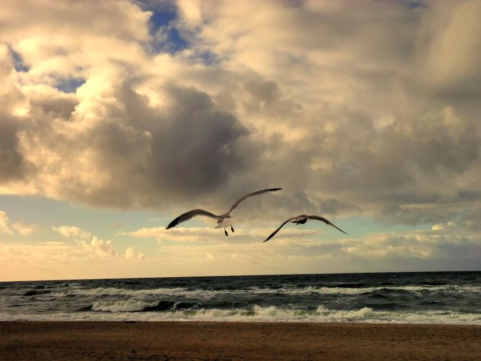 Seagulls Flying Over Beach Against Cloudy Sky