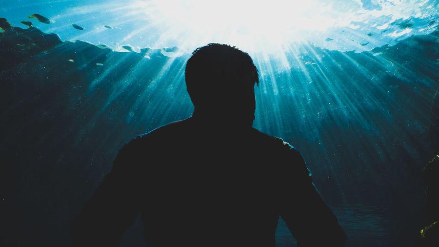Rear view of silhouette man standing in aquarium