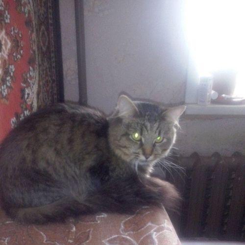 ЛюбителямКошек няша няшность Кузьма кузя котейка котуха любимыйкот любимчик нашипитомцы няшность няша