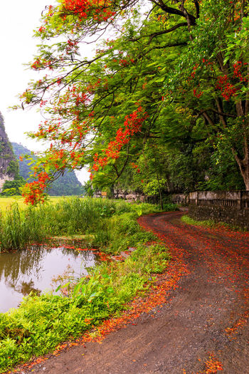 Scenic rural road in Tam Coc Plant Tree Beauty In Nature Growth Nature No People Day Tranquility Water Change Tranquil Scene Green Color Scenics - Nature Outdoors Footpath Reflection Flowering Tree Vietnam Tam Coc Rice Rice Paddy Mountain Vegetation