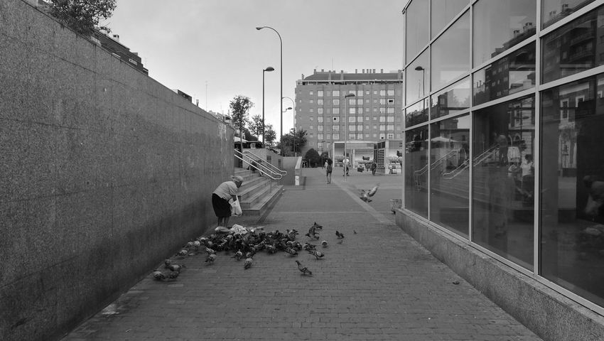 Taking Photos Check This Out Hello World Eyeemphotography Cityscapes City Street Pigeons Pigeons On The Road Palomas Liberty Libertad Madrid Spain_greatshots People And Animals 43 Golden Moments Blackandwhite Blanco Y Negro HuaweiP9 Monocromatic Camera