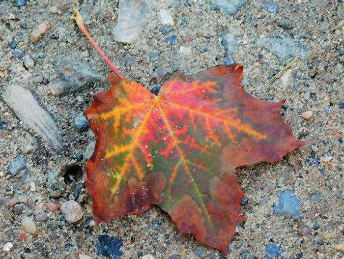 High angle view of orange leaf on rock