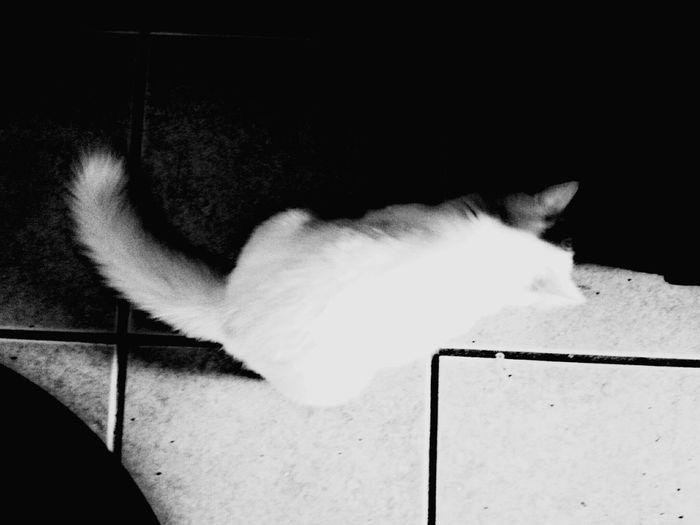 Darkness And Light Puertorico Kanyn Cat Gato Cat♡ ? Catlovers Angora Angoracat Beautiful