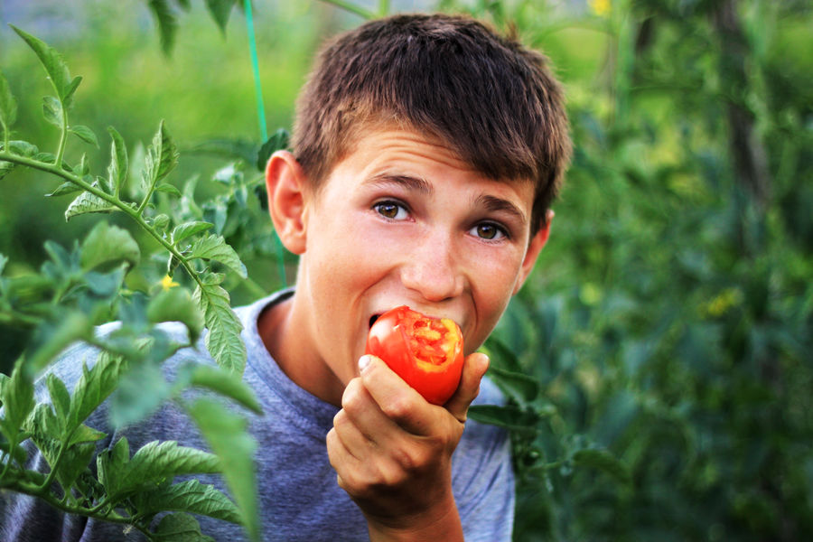 Agriculture Boys Cheerful Childhood Cultivation Eating Field Food Food And Drink Freshness Happiness Headshot Lifestyles One Person Outdoors Plant Plantage Portrait Vegetable