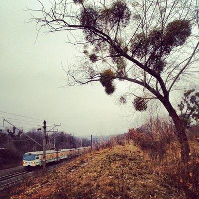 Электричка и паразиты дневник_наблюдателя сырец Syrets жд поезд