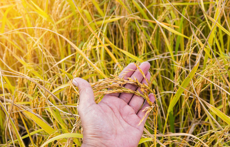 Close-up of person hand holding grass