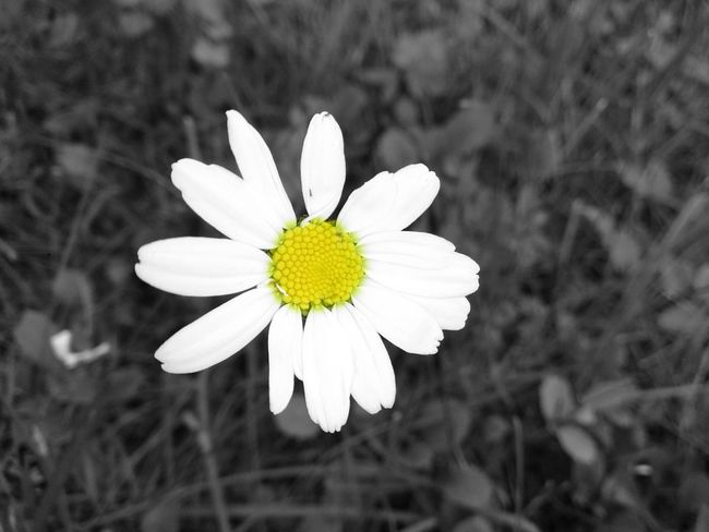 Flower Silnesmyra Eide På Nordmøre Norway