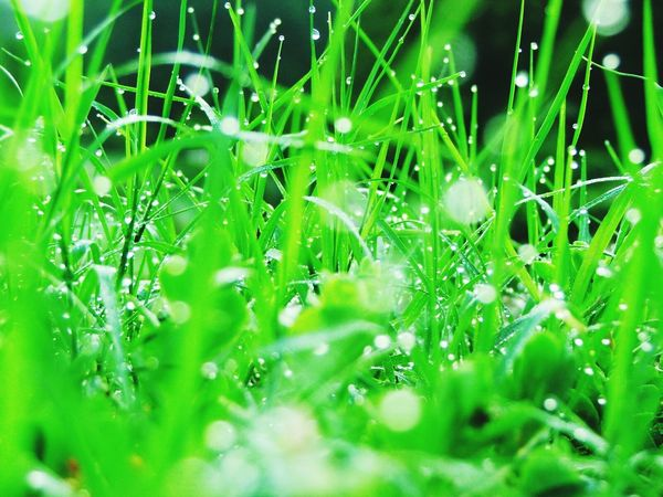 Drop Water Wet Green Color Plant Selective Focus Dew Growth Close-up Grass Backgrounds Rain Full Frame Nature Fragility Freshness Green Lush Foliage Beauty In Nature Day