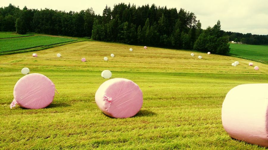 The OO Mission Pink Bales Farmerslife Farming Grass Green Outdoors Farm Life Animal Food Fields Forest Tree