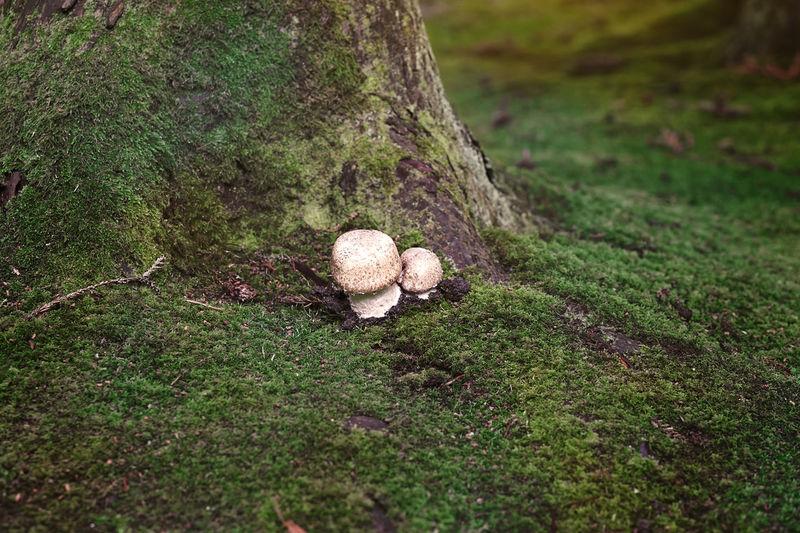 Mushrooms growing on tree trunk
