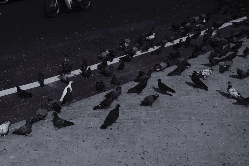 Street birds. Dove Neighborhood Map The Street Photographer - 2017 EyeEm Awards