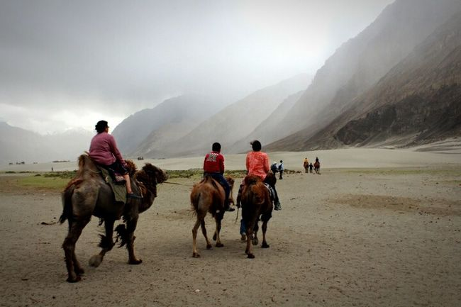 Jammu And Kashmir Travel Photography Amazing View Original Experiences Landscape_Collection Desert Incredible India Trips Around The World June 2016 Ladakh Beautiful Nature Hills Feel The Journey Nubra Valley Camel Riding Bactrian Camel