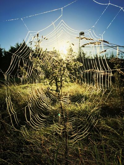 Close-up of spider web against clear sky